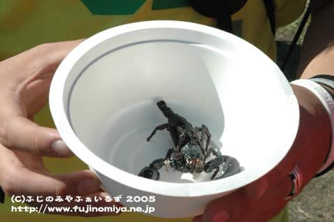 朝霧JAM2005 5