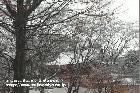 雪の富士山本宮浅間大社