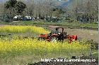 菜の花とトラクター